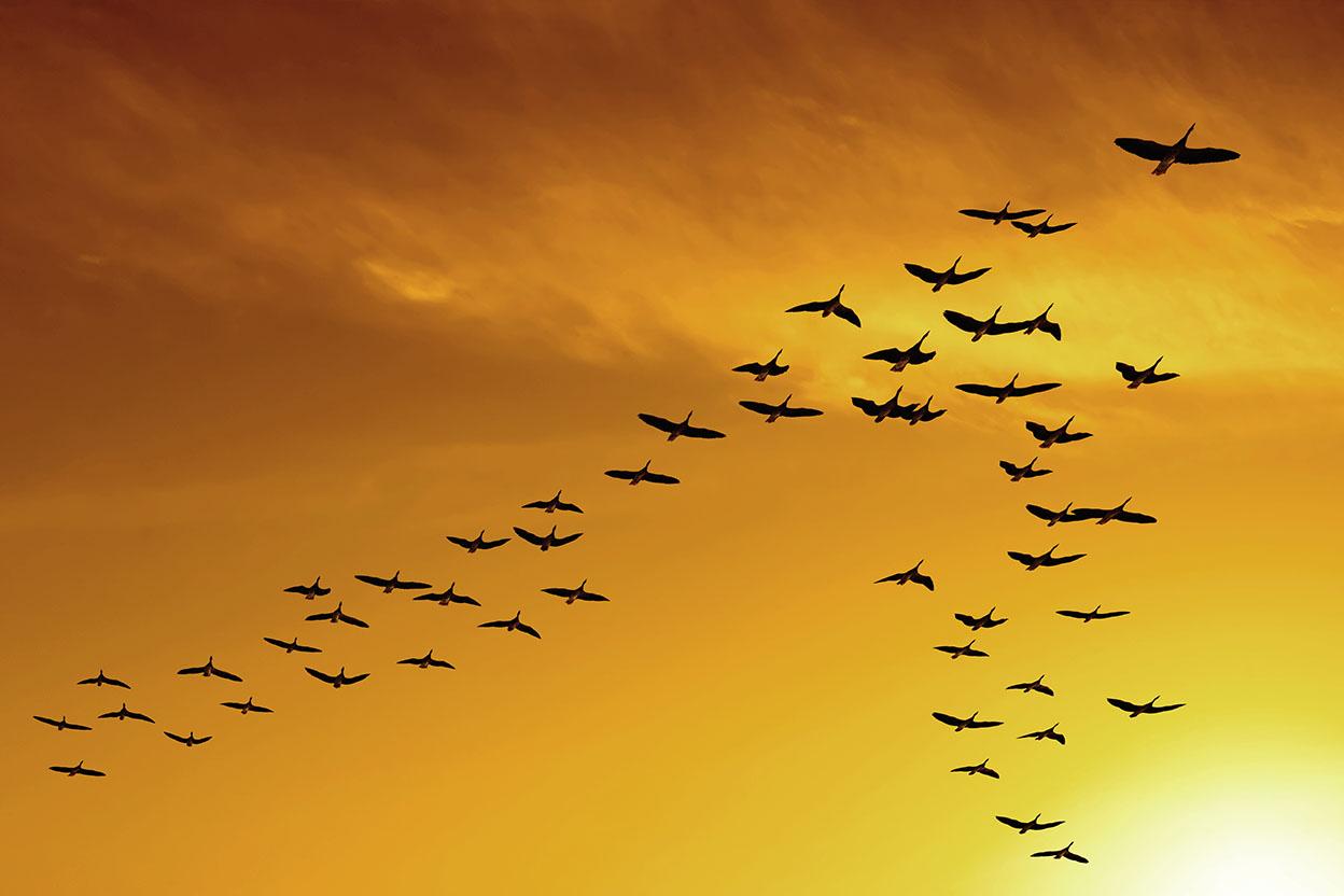 Migrating_Birds